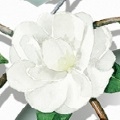 Chanel-jasmin-small.jpg